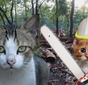 Sustainable Cats v1.1