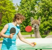 llama-tennis
