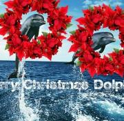 Happy Christmas Dolphin - Karys Lee