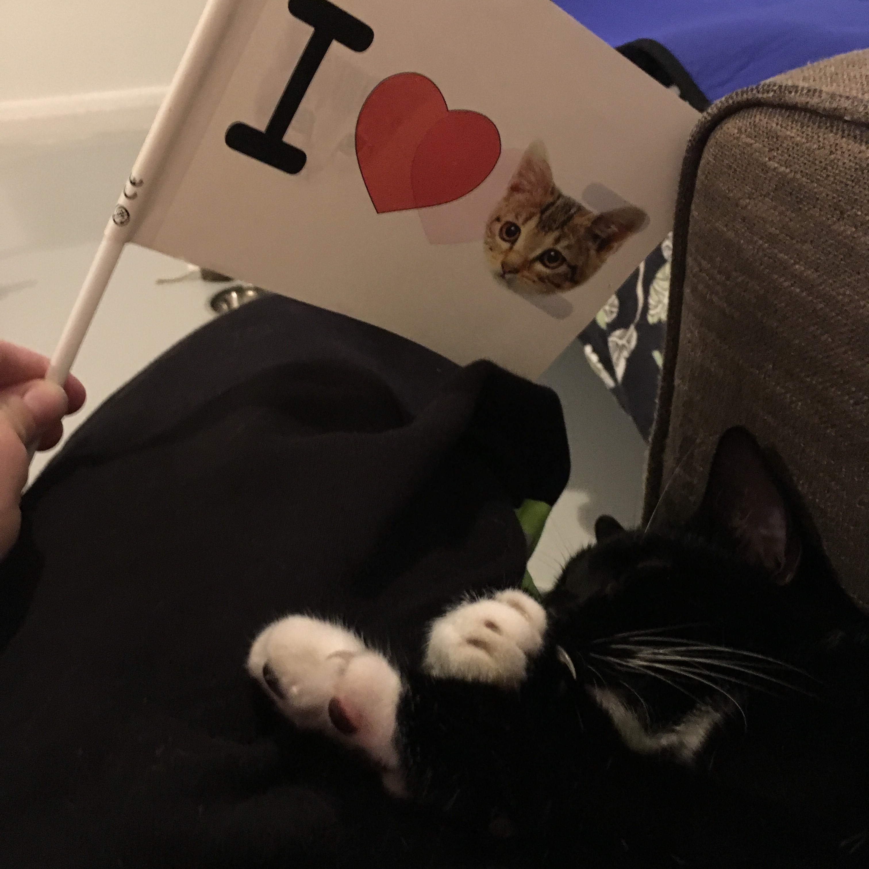Image of Monkey the Cat lying comfortably next to a flag that reads I Heart and an image of a cat's face