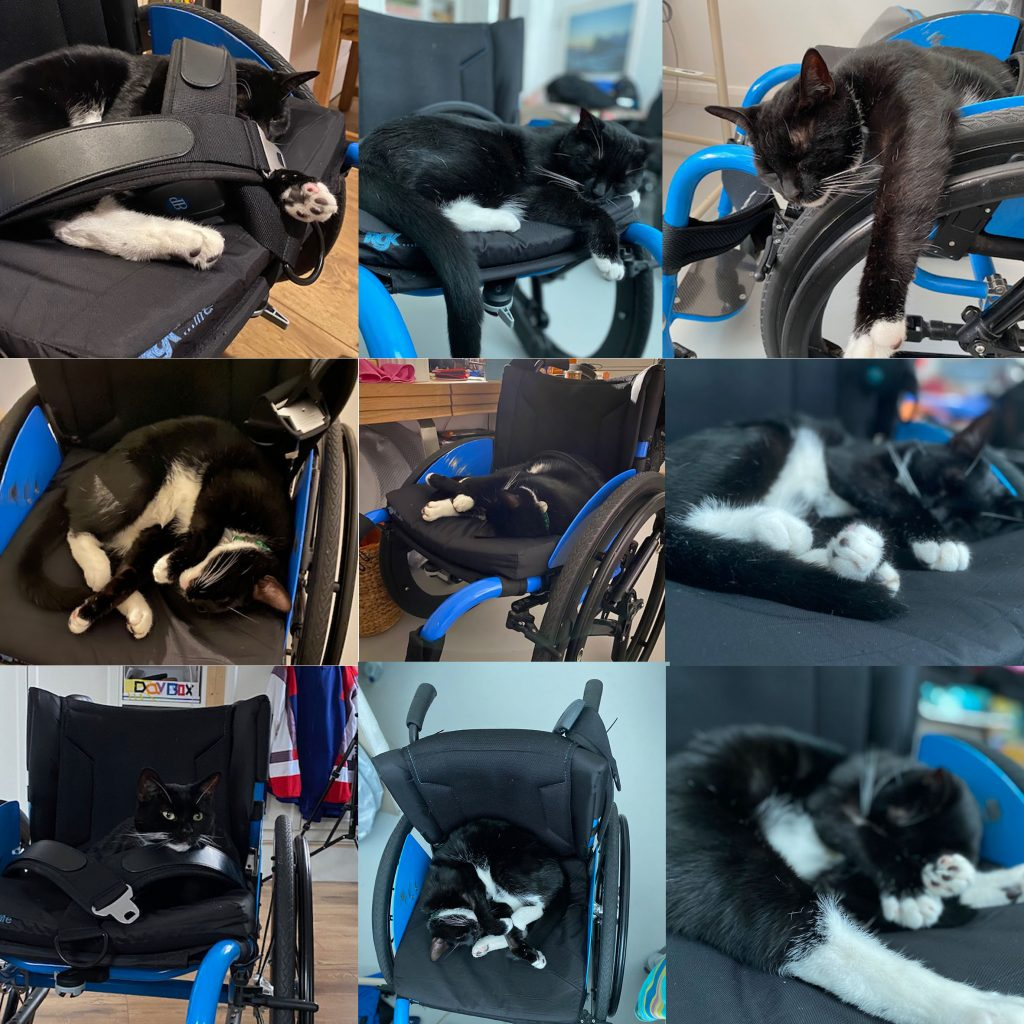 A montage of nine photos arranged in a grid - all the photos show a black cat with a white neck and stomach curled up in a bright blue wheelchair. In some images he is even wearing the wheelchair seatbelt.