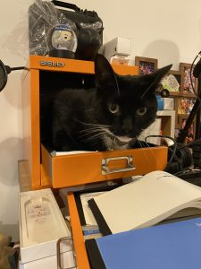 A photograph showing a black cat with a white chin sitting inside a small bright orange set of filing drawers. The top three drawers are removed and the cat is stinging the small space where the drawers would be - only hits head and shoulders are visible and he looks straight into the camera.
