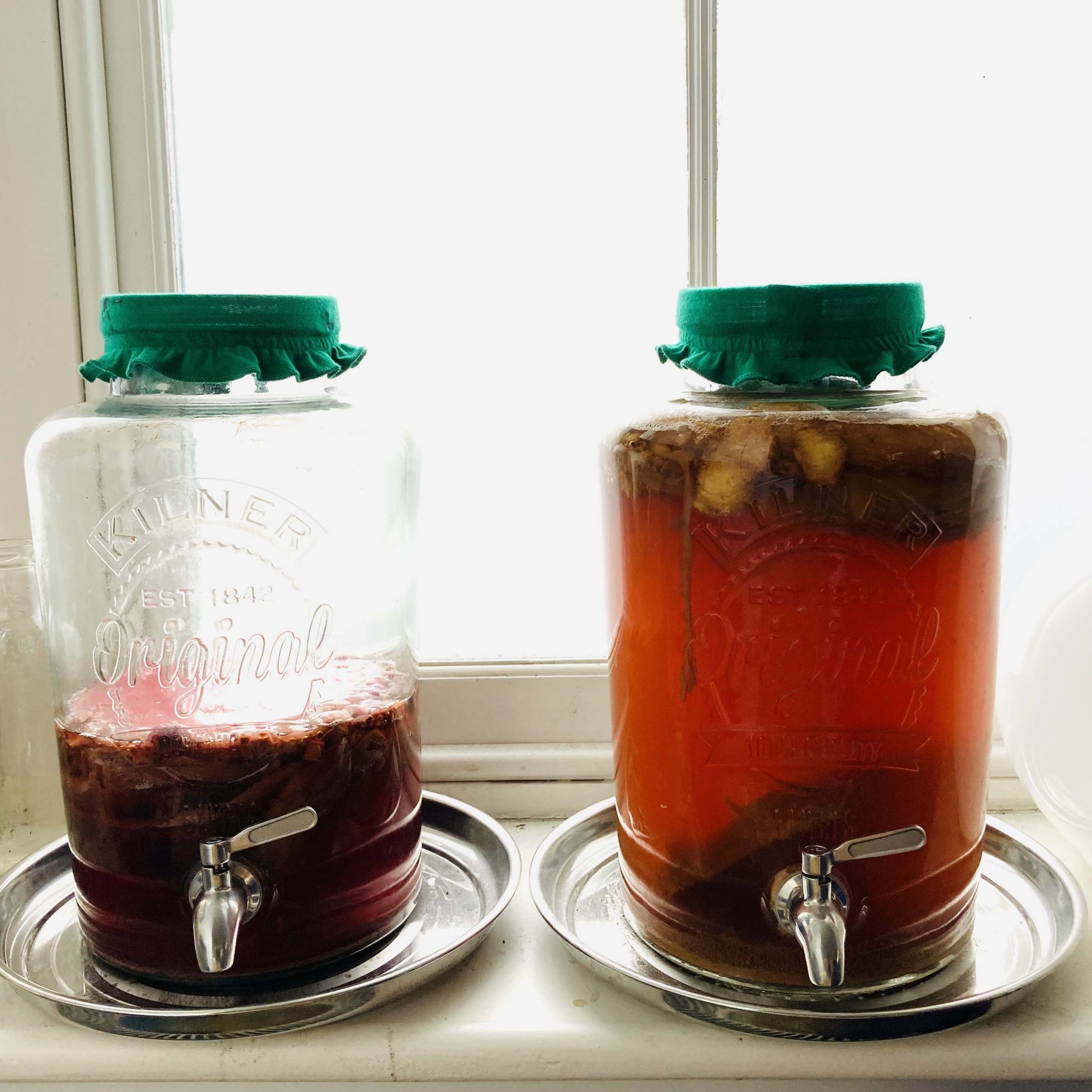 A photograph of two big 8 litre Kilner vats containing kombucha brews sitting on a window sill. Both vats are sitting on a steel plate and are wearing green fabric lid covers. The right hand vat is full to the brim and is a glowing amber colour. In the liquid, the scoby can be seen floating on top fermenting the tea, sugar and flavouring mix in the vat. The vat on the left is less than half full and the liquid has a purple tinge.