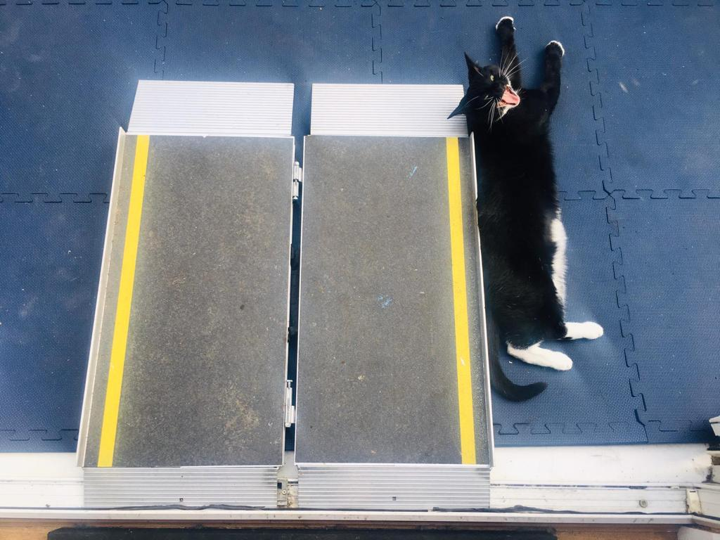 A photo of Monkey, Jess's black and white cat, who is yawning and stretched out on the floor next to a wheelchair ramp.